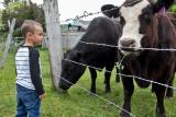 0908_Kids_and_cows.jpg