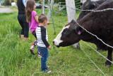 0909_Kids_and_cows.jpg