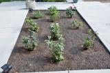 4436_Rose_Garden.jpg