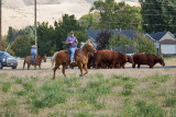 4751_Cattle_drive.jpg