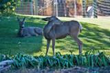 4567_Deer.jpg