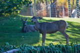 4566_Deer.jpg