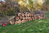 4690_Firewood.jpg