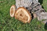 4698_Firewood_slice.jpg
