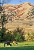 4721_Deer_in_pasture.jpg