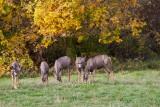 4812_Deer_2018.jpg