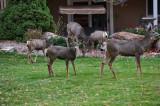 4829_Deer_2018.jpg