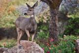 4915_Deer.jpg