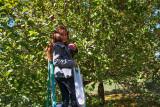 4942_Kids_picking_apples.jpg