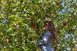 4945_Kids_picking_apples.jpg