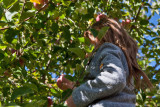 4946_Kids_picking_apples.jpg