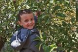 4947_Kids_picking_apples.jpg