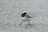 Drôles d'Oiseaux - Birds of a feather...