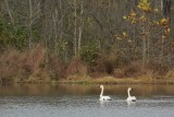 Environmental Studies on the Piedmont