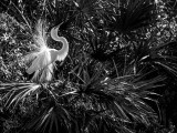 The World in Black and White