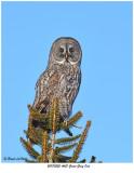 20170220 4621 SERIES -  Great Gray Owl.jpg