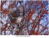 20170212 4400 Gray Squirrel.jpg