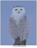 20170120 3541 Snowy Owl.jpg