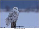 20170120 3452 Snowy Owl r1.jpg