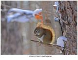 20161217 9521 Red Squirrel.jpg