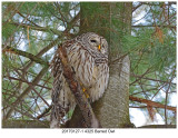 20170127-1 4325 Barred Owl.jpg
