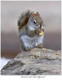 20170318 5061 Red Squirrel.jpg