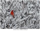 20170325 1832 SERIES -  Northern Cardinal.jpg