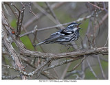 20170517-2 0793 Black and White Warbler r1r1.jpg