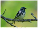 20170610  2882  Black and White Warbler.jpg
