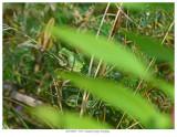 20170829  5329 SERIES -  Eastern Gray Treefrog.jpg