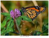 20171023  6815  SERIES -  Monarch.jpg