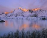Ginger Dip Selfjord