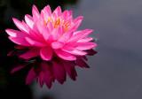 FLOWERS, PLANTS & BUGS