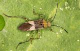 bug 50
