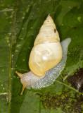 Snail 50
