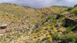 Catalina Foothills Spring