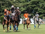 Action Packed Polo