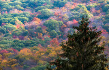 A Pine Tree And Some Colors
