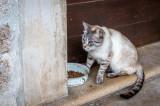 Resident Cat of Quinta da Regaleira
