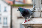 Even the Pigeons in Portugal Were Pretty