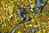 Oiseaux de proie -5