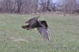 oiseaux de proie 6