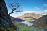 tree at cwm idwal.jpg