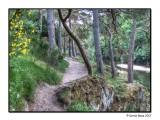 Tweedside Walk