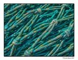 Nets & Knots