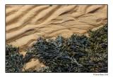 Seaweed and Sand