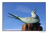 Green Tern