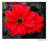 Botanic Red