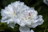 Explosion florale 2017