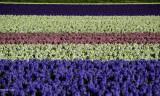 Le pays des fleurs